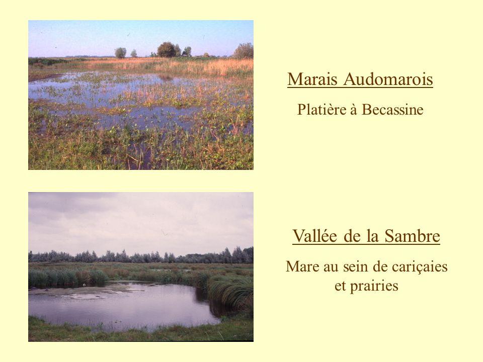Marais Audomarois Platière à Becassine Vallée de la Sambre Mare au sein de cariçaies et prairies