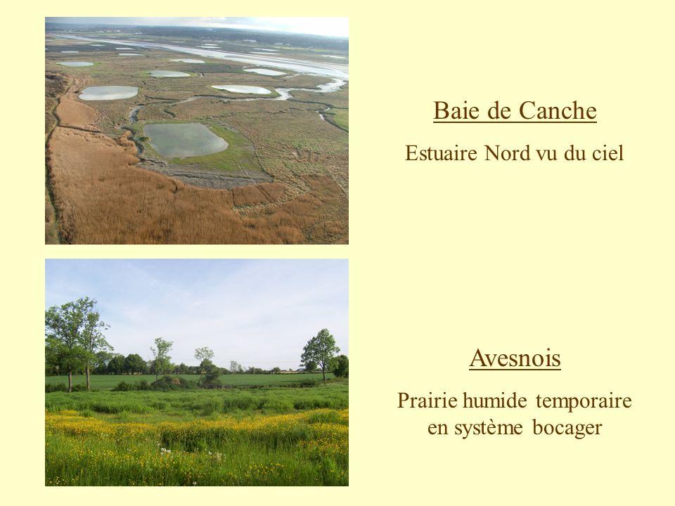 Baie de Canche Estuaire Nord vu du ciel Avesnois Prairie humide temporaire en système bocager