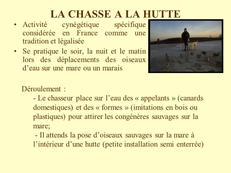 LA CHASSE A LA HUTTE Activité cynégétique spécifique considérée en France comme une tradition et légalisée Se pratique le soir, la nuit et le matin lo