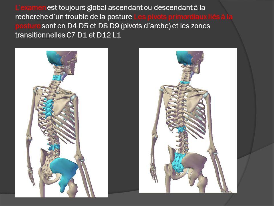 Lexamen est toujours global ascendant ou descendant à la recherche dun trouble de la posture Les pivots primordiaux liés à la posture sont en D4 D5 et