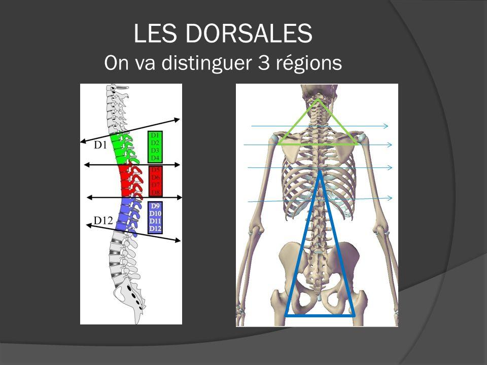 LES DORSALES SUPÉRIEURES Il y a une interdépendance des éléments articulaires de C0 à D4 avec les liens musculaires directs ou réfléchis par lomoplate formants la ceinture cervico dorso scapulaire Le trapèze supérieur et moyenRhomboïdes