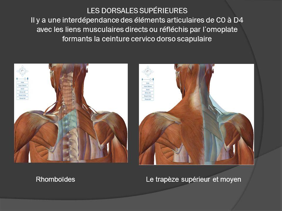 LES DORSALES SUPÉRIEURES Il y a une interdépendance des éléments articulaires de C0 à D4 avec les liens musculaires directs ou réfléchis par lomoplate