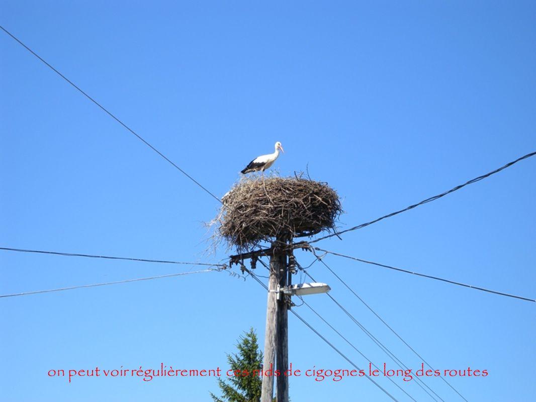 on peut voir régulièrement ces nids de cigognes le long des routes