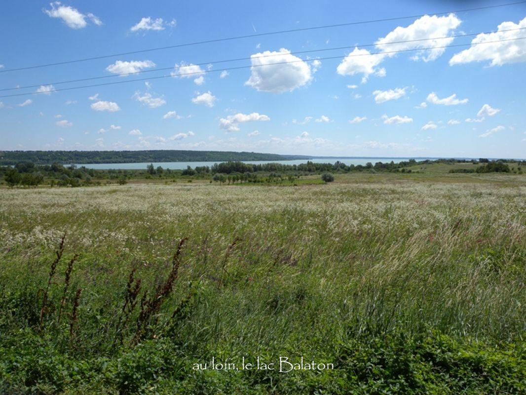 au loin, le lac Balaton