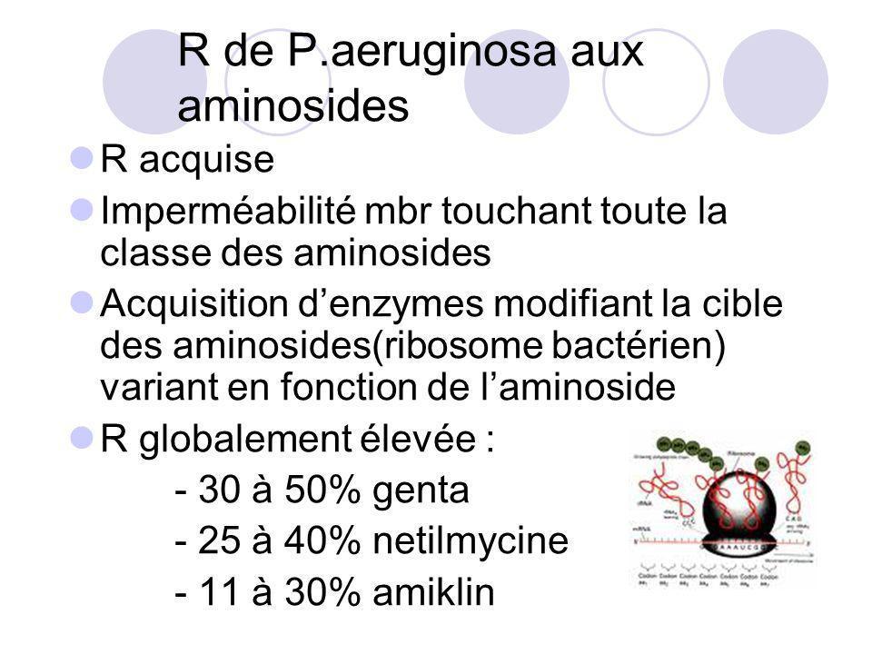 R de P.aeruginosa aux aminosides R acquise Imperméabilité mbr touchant toute la classe des aminosides Acquisition denzymes modifiant la cible des amin