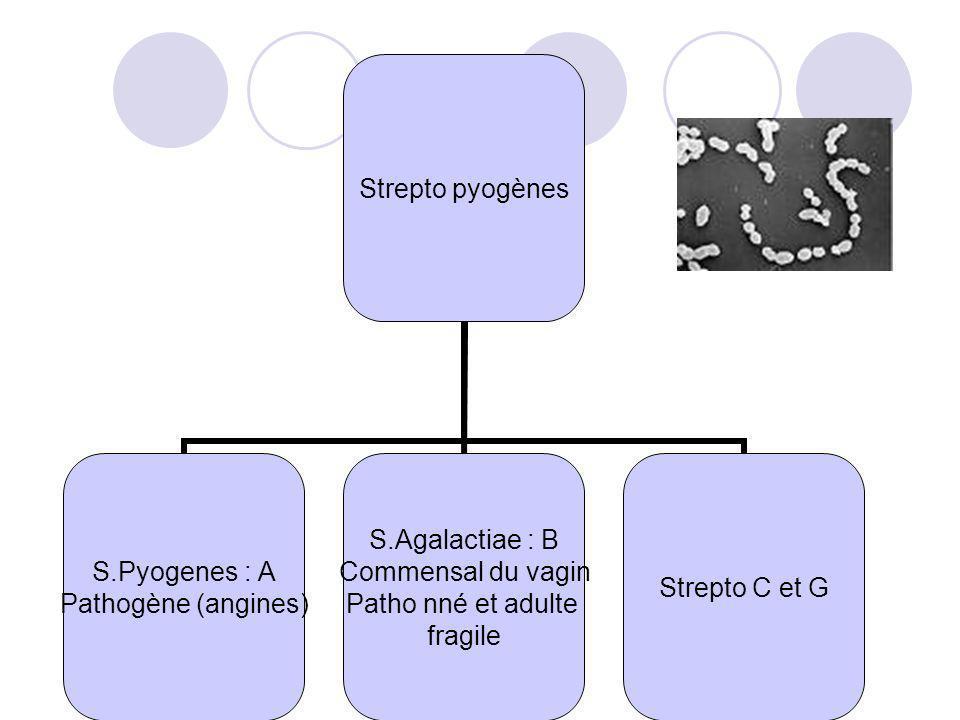 Strepto pyogènes S.Pyogenes : A Pathogène (angines) S.Agalactiae : B Commensal du vagin Patho nné et adulte fragile Strepto C et G