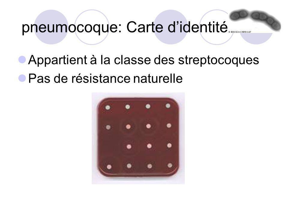pneumocoque: Carte didentité Appartient à la classe des streptocoques Pas de résistance naturelle