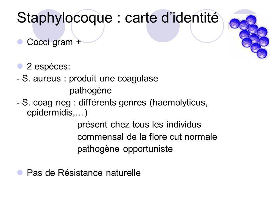 Staphylocoque : carte didentité Cocci gram + 2 espèces: - S. aureus : produit une coagulase pathogène - S. coag neg : différents genres (haemolyticus,