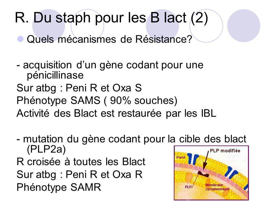 R. Du staph pour les B lact (2) Quels mécanismes de Résistance? - acquisition dun gène codant pour une pénicillinase Sur atbg : Peni R et Oxa S Phénot