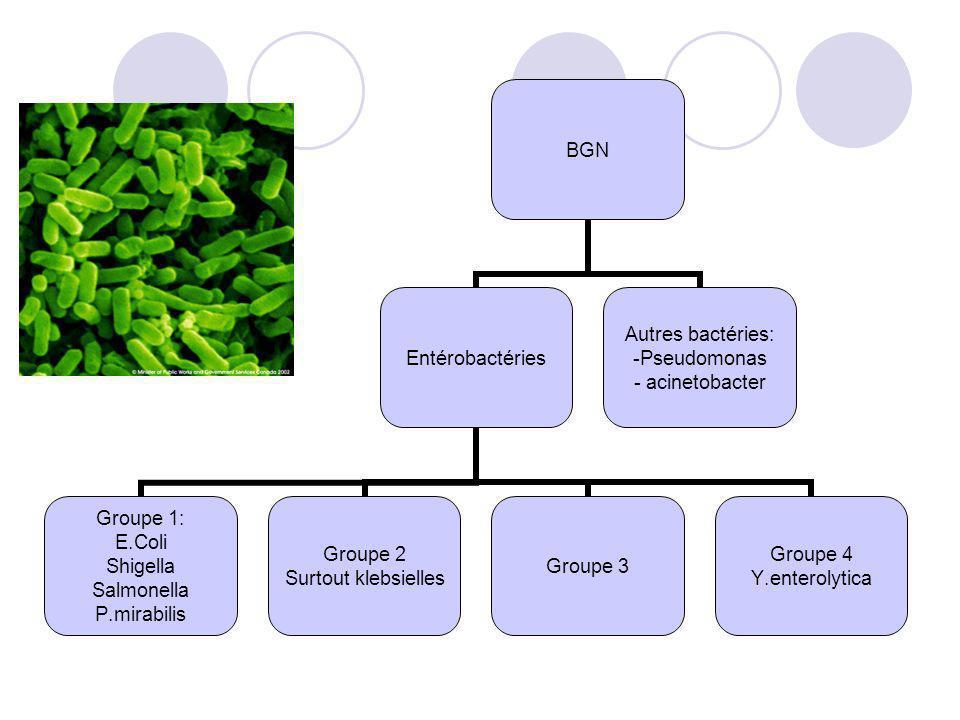 BGN Entérobactéries Groupe 1: E.Coli Shigella Salmonella P.mirabilis Groupe 2 Surtout klebsielles Groupe 3 Groupe 4 Y.enterolytica Autres bactéries: P