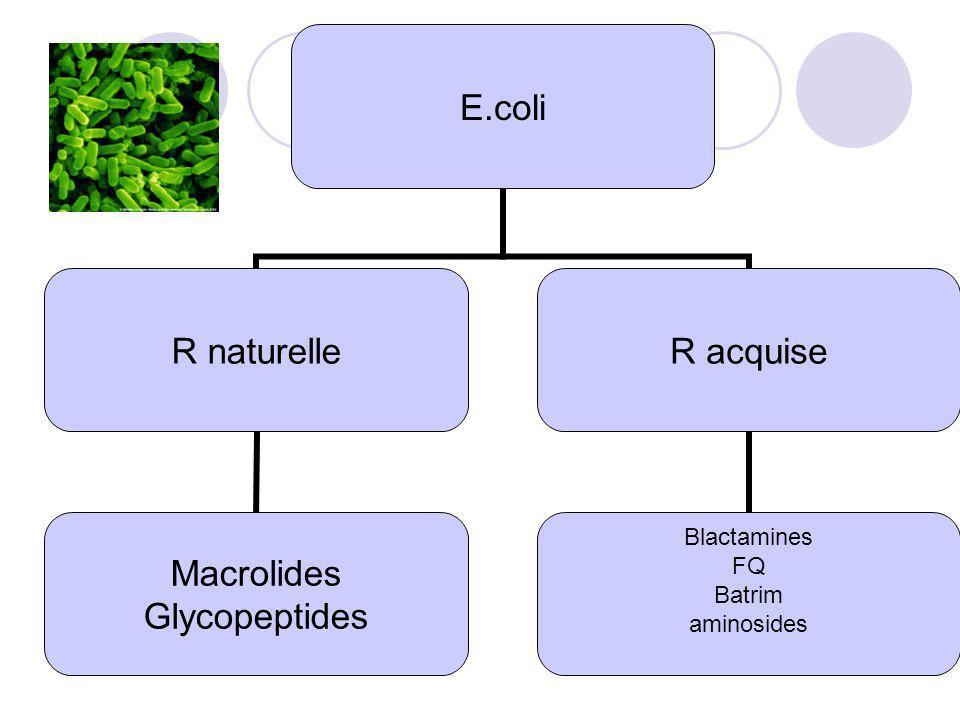 E.coli R naturelle Macrolides Glycopeptides R acquise Blactamines FQ Batrim aminosides