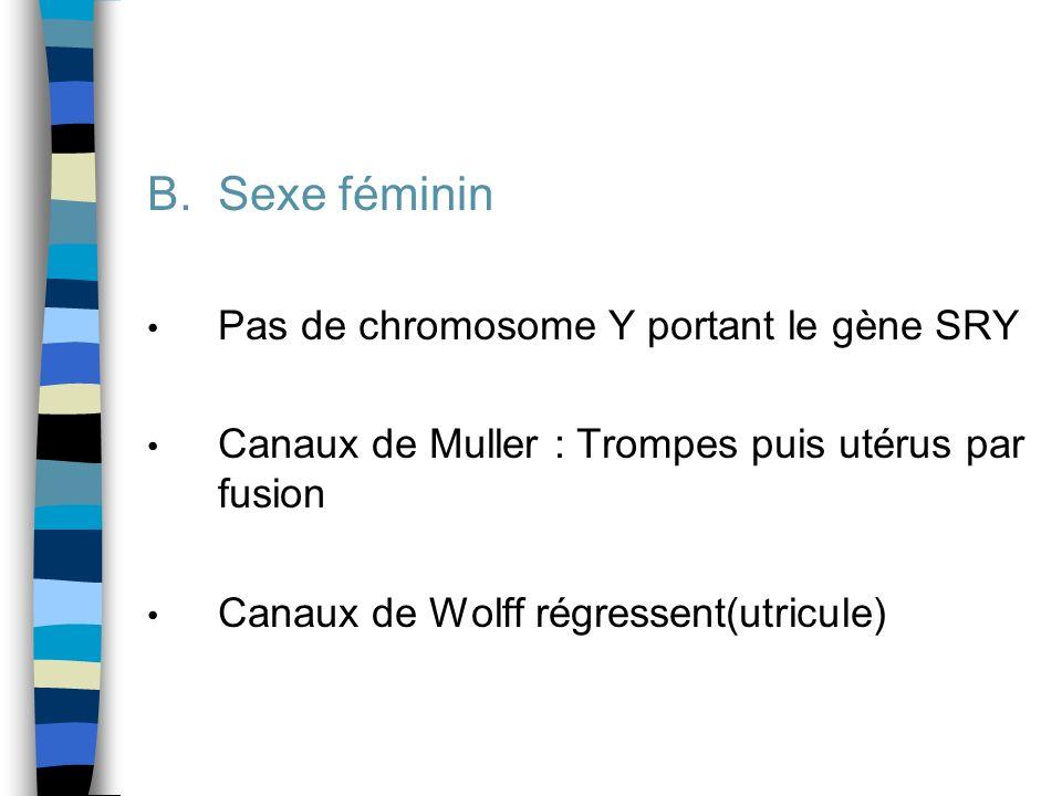 B.Sexe féminin Pas de chromosome Y portant le gène SRY Canaux de Muller : Trompes puis utérus par fusion Canaux de Wolff régressent(utricule)