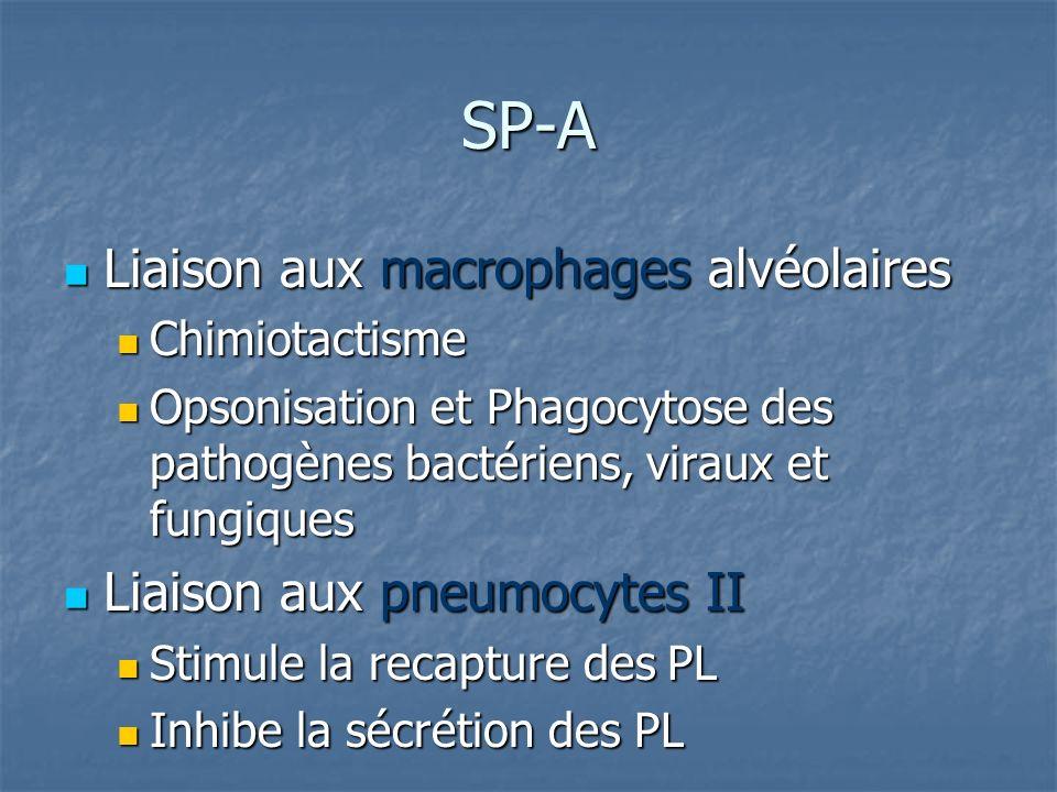 SP-A Liaison aux macrophages alvéolaires Liaison aux macrophages alvéolaires Chimiotactisme Chimiotactisme Opsonisation et Phagocytose des pathogènes