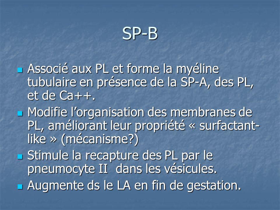 SP-B Associé aux PL et forme la myéline tubulaire en présence de la SP-A, des PL, et de Ca++. Associé aux PL et forme la myéline tubulaire en présence