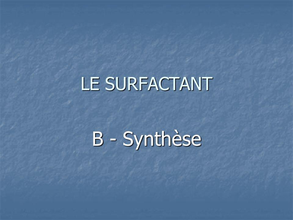 LE SURFACTANT B - Synthèse