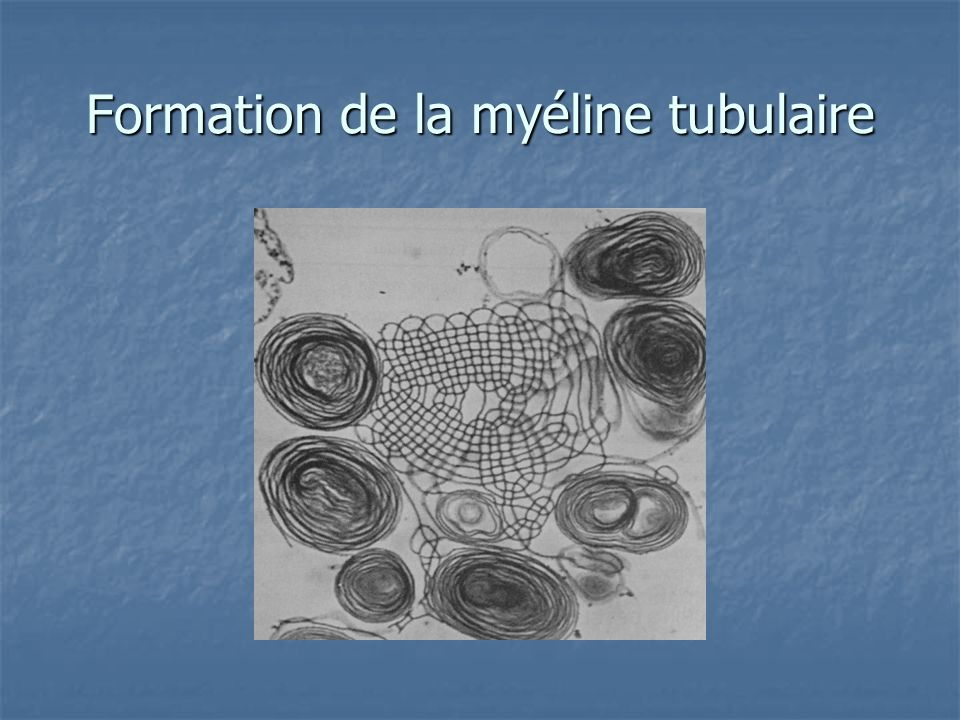 Formation de la myéline tubulaire
