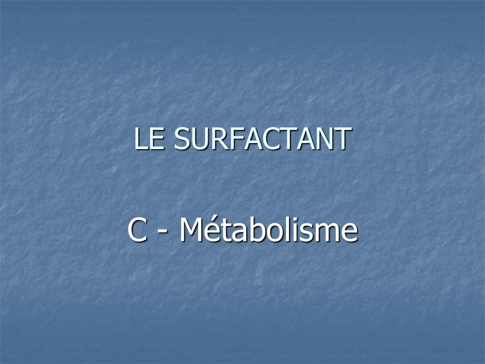 LE SURFACTANT C - Métabolisme