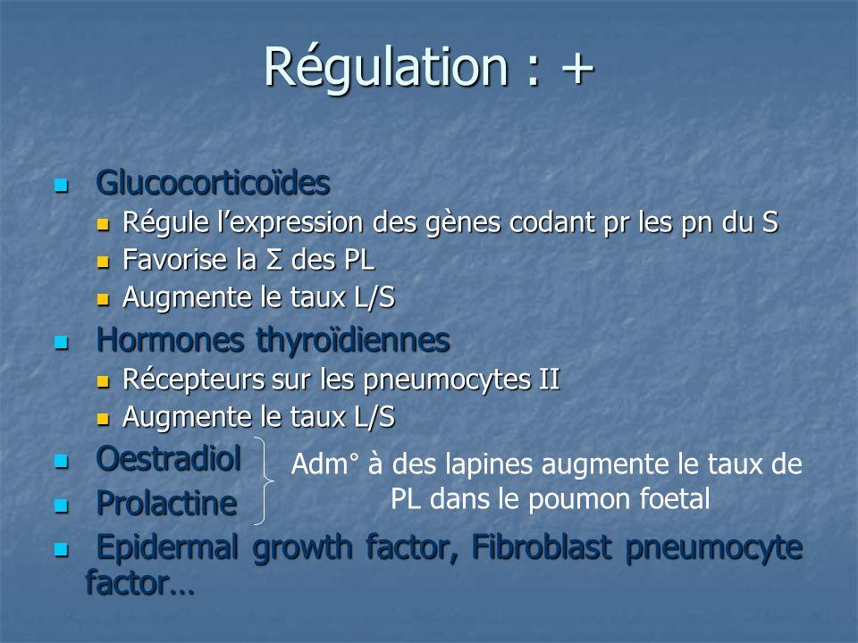 Régulation : + Glucocorticoïdes Glucocorticoïdes Régule lexpression des gènes codant pr les pn du S Régule lexpression des gènes codant pr les pn du S