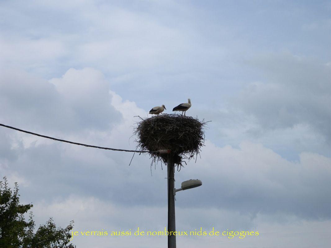 je verrais aussi de nombreux nids de cigognes
