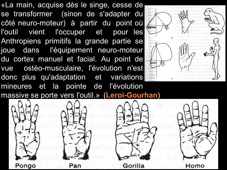 «La main, acquise dès le singe, cesse de se transformer (sinon de s'adapter du côté neuro-moteur) à partir du point où l'outil vient l'occuper et pour