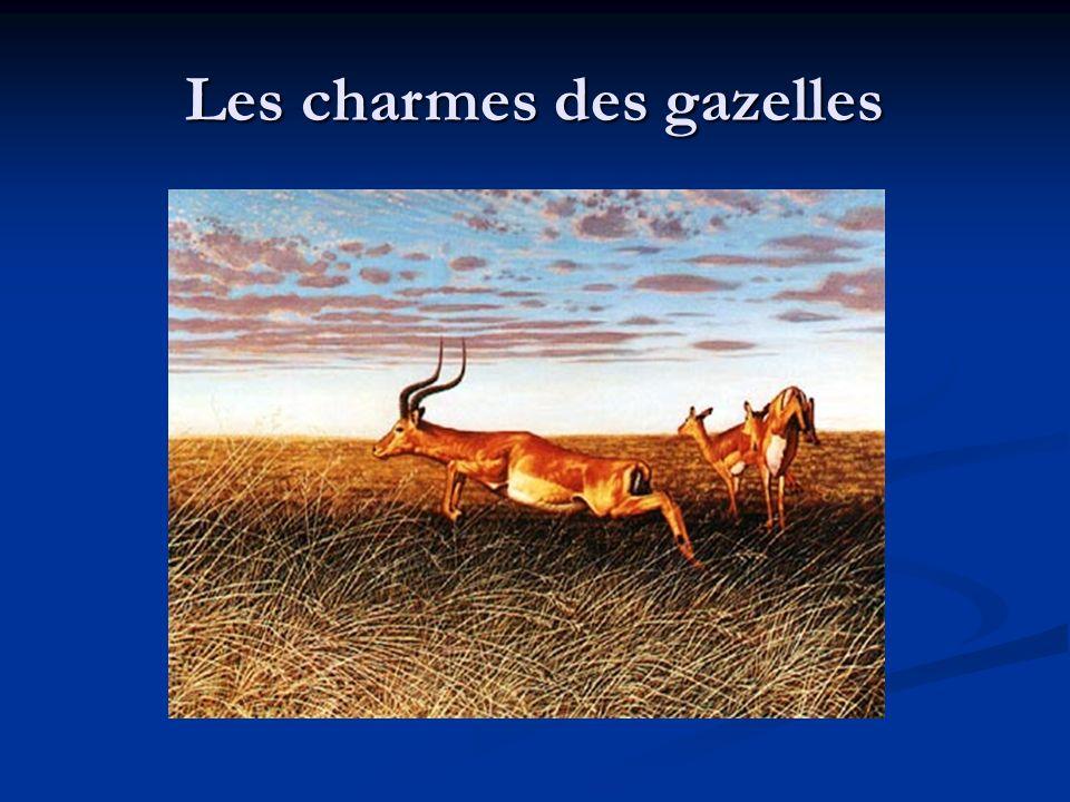Les charmes des gazelles