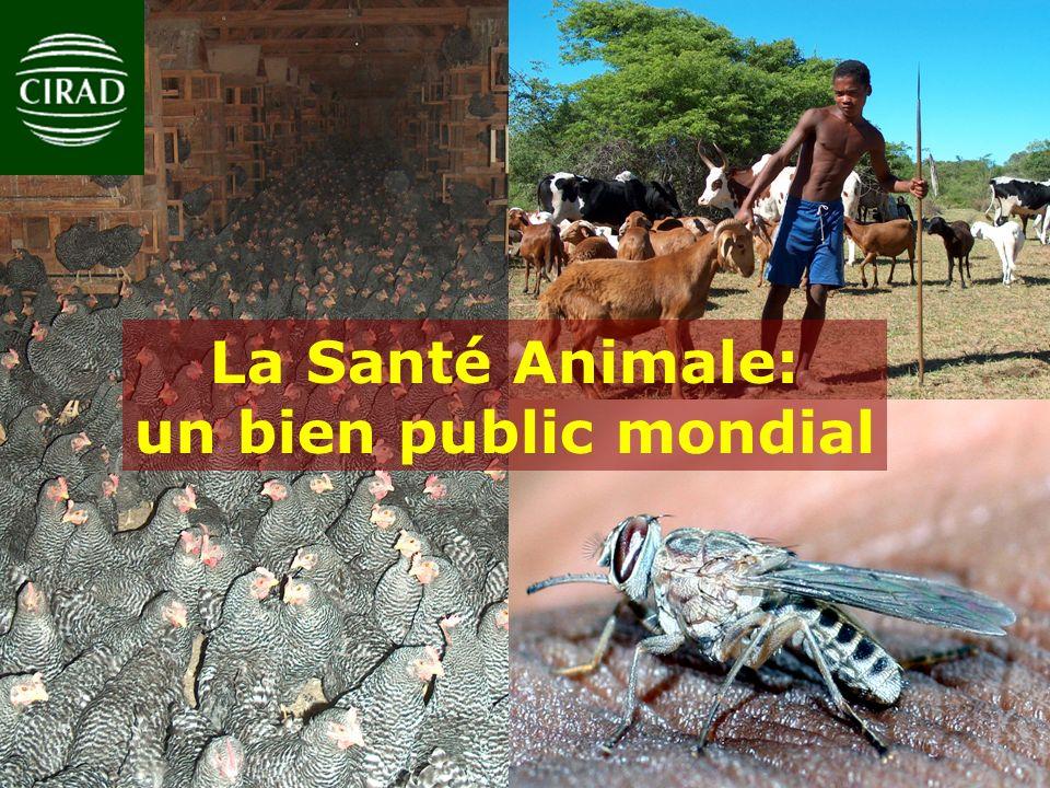La Santé Animale: un bien public mondial