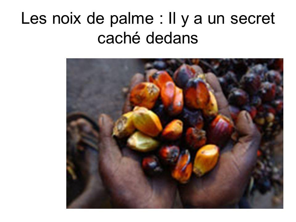 Les noix de palme : Il y a un secret caché dedans