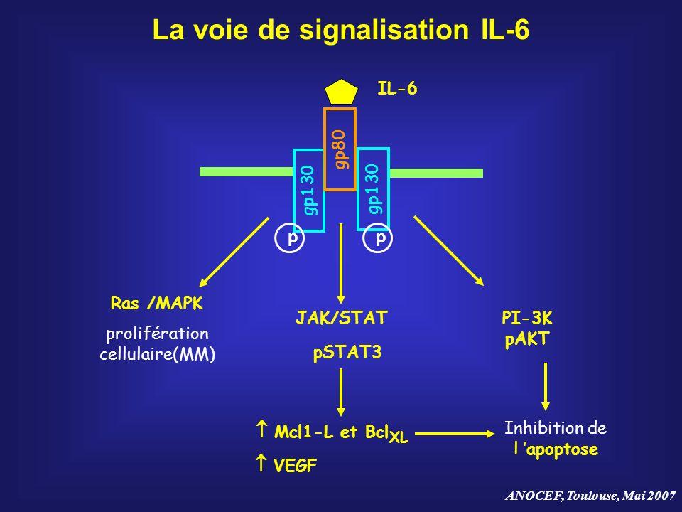 ANOCEF, Toulouse, Mai 2007 La voie de signalisation IL-6 gp130 gp80 IL-6 gp130 Ras /MAPK prolifération cellulaire(MM) pSTAT3 PI-3K pAKT Inhibition de