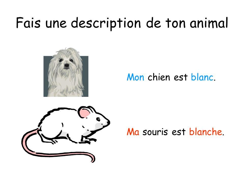 Fais une description de ton animal Mon chien est blanc. Ma souris est blanche.