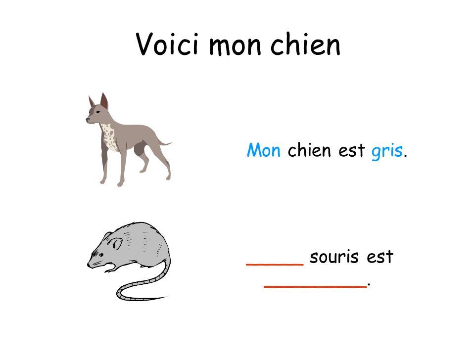 Voici mon chien Mon chien est gris. _____ souris est _________.