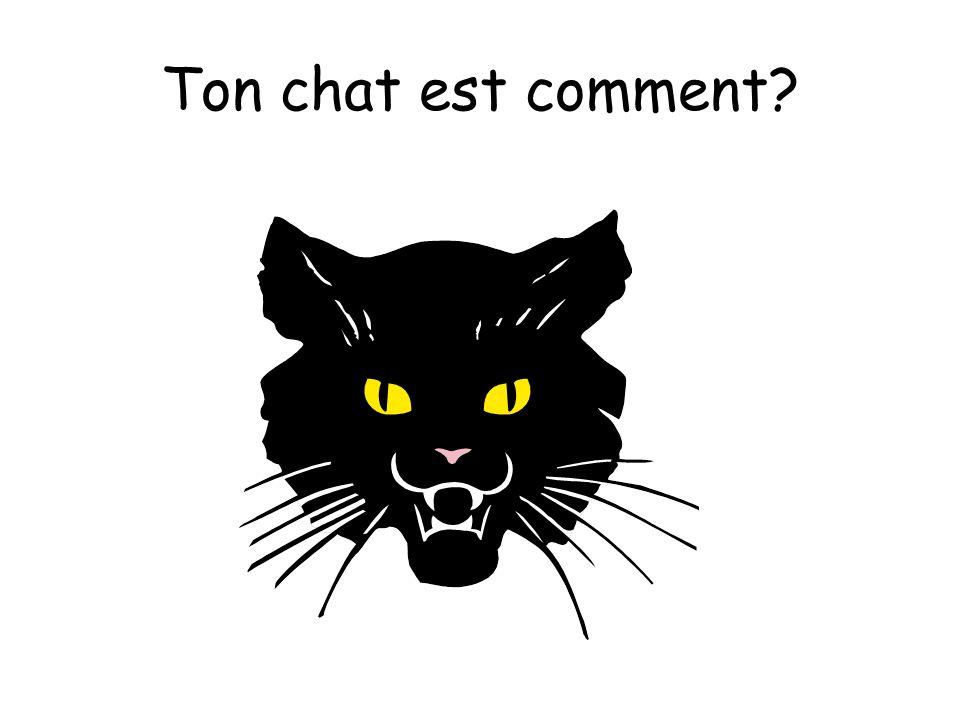 Ton chat est comment?