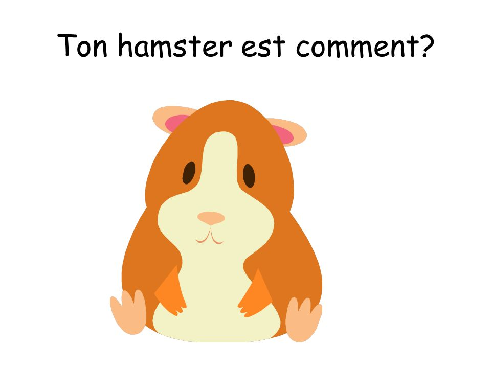 Ton hamster est comment?