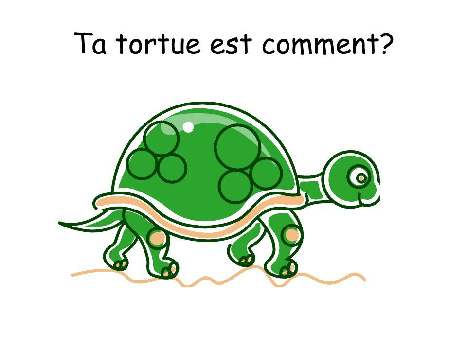 Ta tortue est comment?