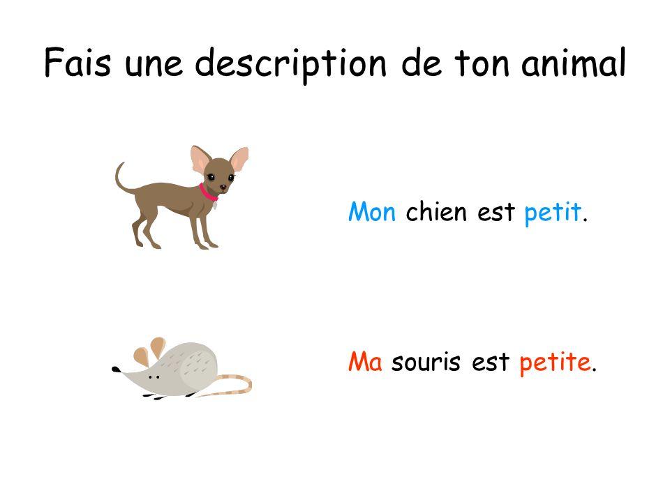 Fais une description de ton animal Mon chien est petit. Ma souris est petite.