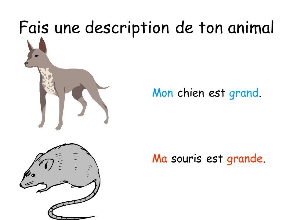 Fais une description de ton animal Mon chien est grand. Ma souris est grande.