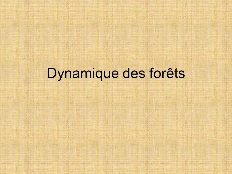 Dynamique des forêts