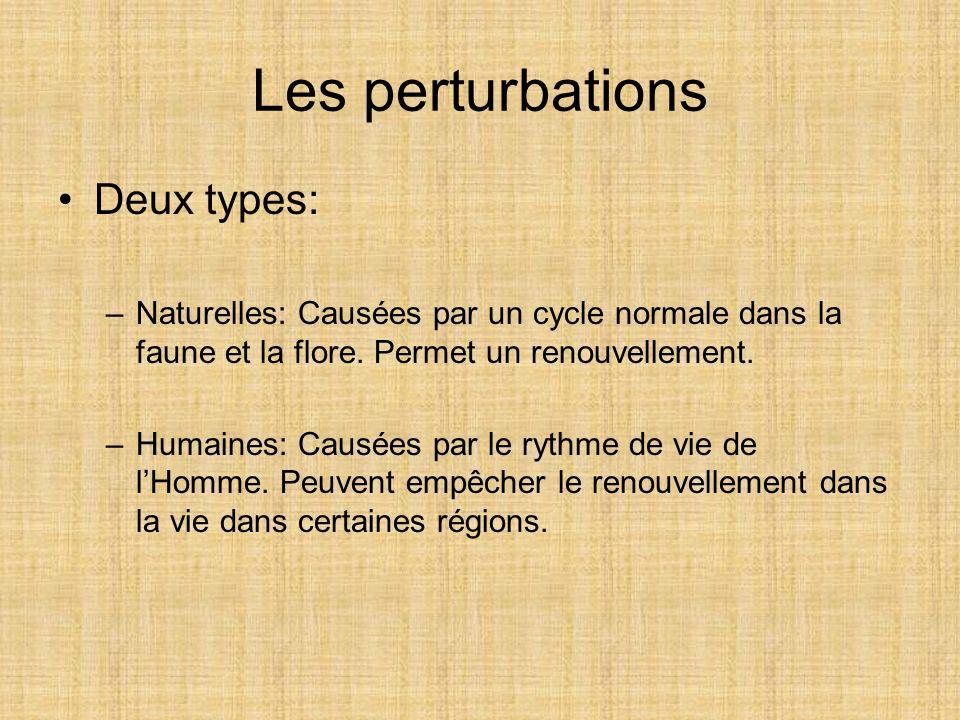 Les perturbations Deux types: –Naturelles: Causées par un cycle normale dans la faune et la flore. Permet un renouvellement. –Humaines: Causées par le