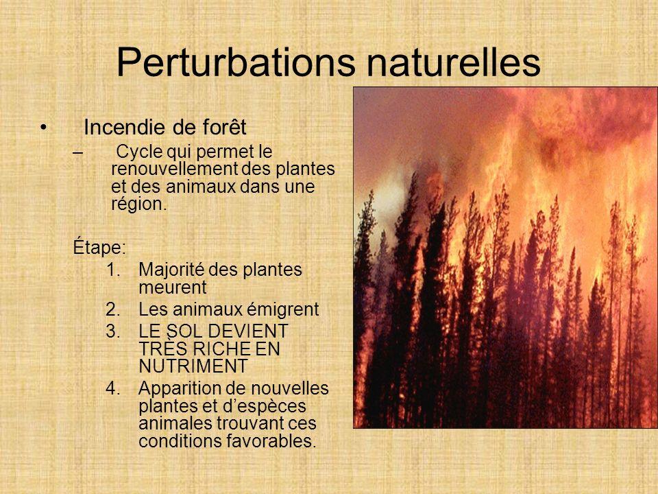 Perturbations naturelles Incendie de forêt – Cycle qui permet le renouvellement des plantes et des animaux dans une région. Étape: 1.Majorité des plan