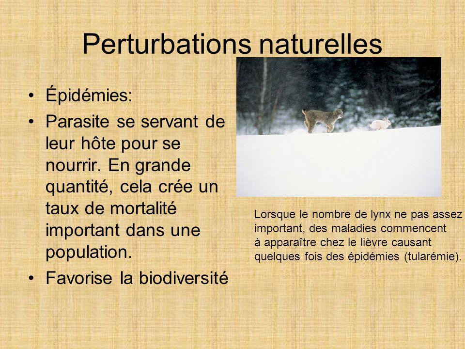 Perturbations naturelles Épidémies: Parasite se servant de leur hôte pour se nourrir. En grande quantité, cela crée un taux de mortalité important dan