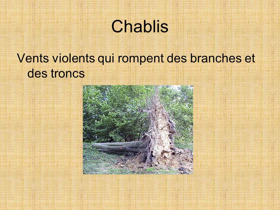 Chablis Vents violents qui rompent des branches et des troncs