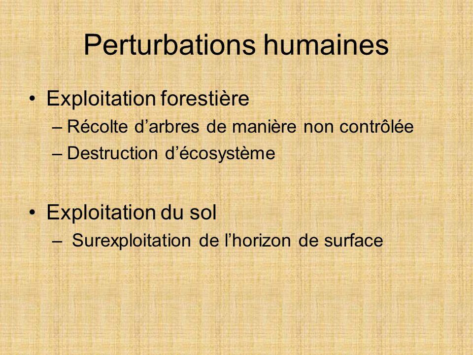 Perturbations humaines Exploitation forestière –Récolte darbres de manière non contrôlée –Destruction décosystème Exploitation du sol – Surexploitatio