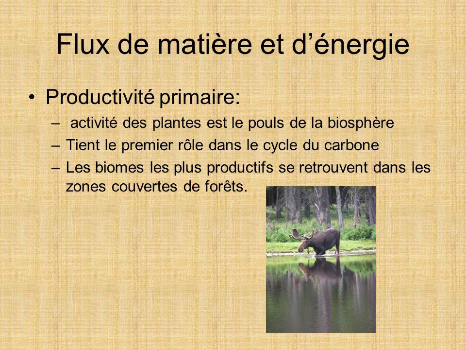 Flux de matière et dénergie Productivité primaire: – activité des plantes est le pouls de la biosphère –Tient le premier rôle dans le cycle du carbone