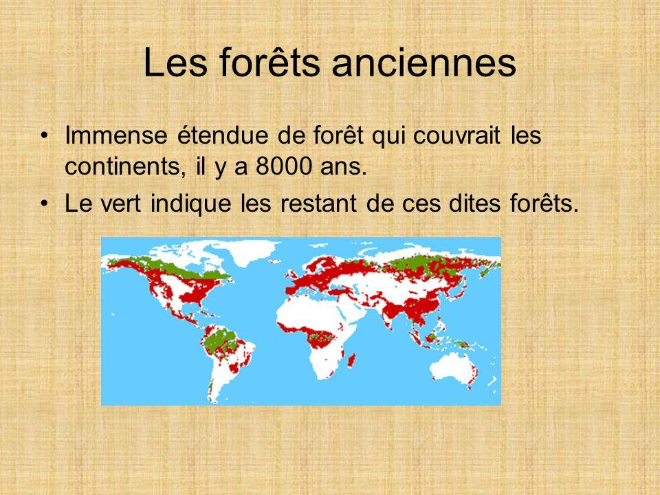 Les forêts anciennes Immense étendue de forêt qui couvrait les continents, il y a 8000 ans. Le vert indique les restant de ces dites forêts.