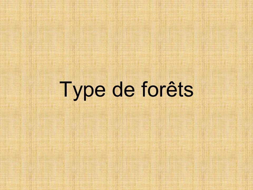 Type de forêts