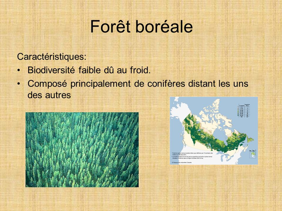 Forêt boréale Caractéristiques: Biodiversité faible dû au froid. Composé principalement de conifères distant les uns des autres