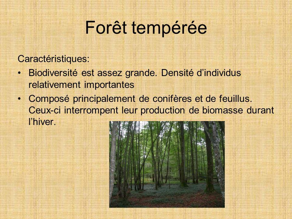 Forêt tempérée Caractéristiques: Biodiversité est assez grande. Densité dindividus relativement importantes Composé principalement de conifères et de