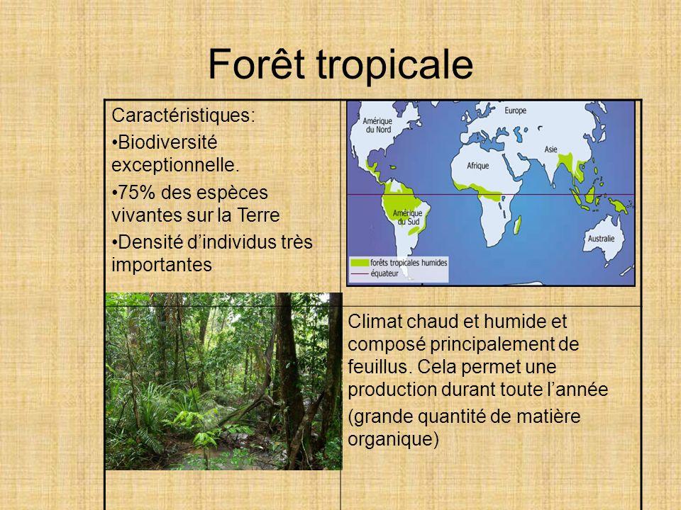 Forêt tropicale Caractéristiques: Biodiversité exceptionnelle. 75% des espèces vivantes sur la Terre Densité dindividus très importantes Climat chaud