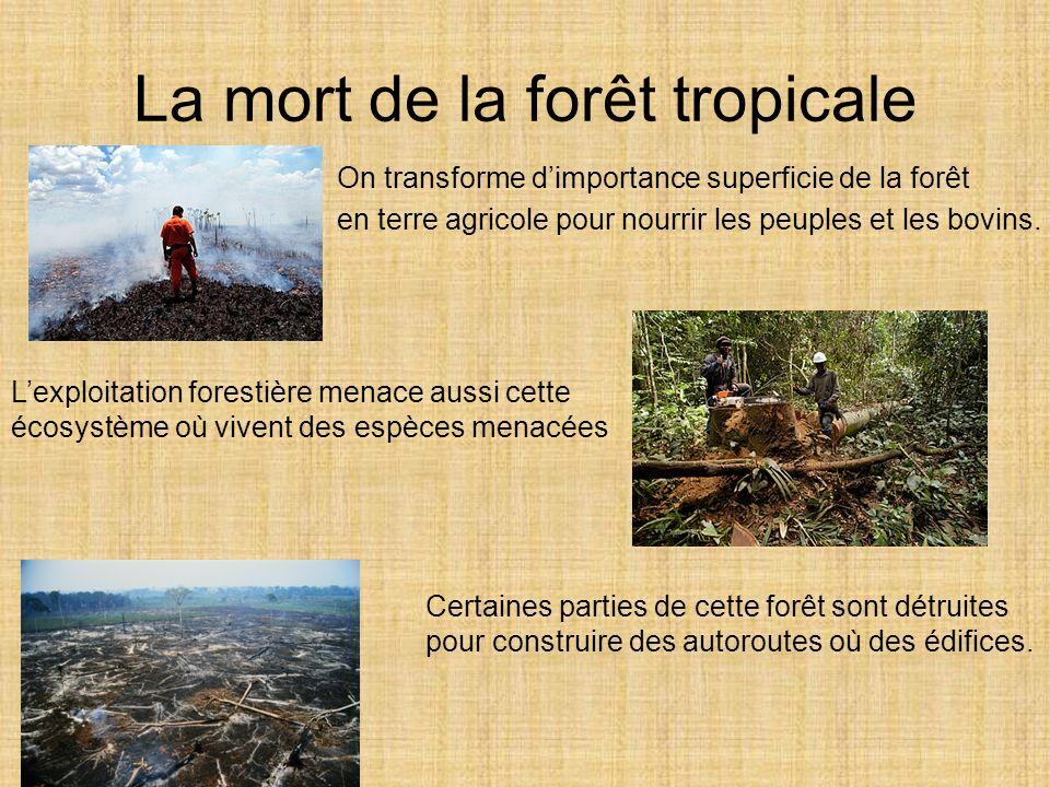 La mort de la forêt tropicale On transforme dimportance superficie de la forêt en terre agricole pour nourrir les peuples et les bovins. Lexploitation