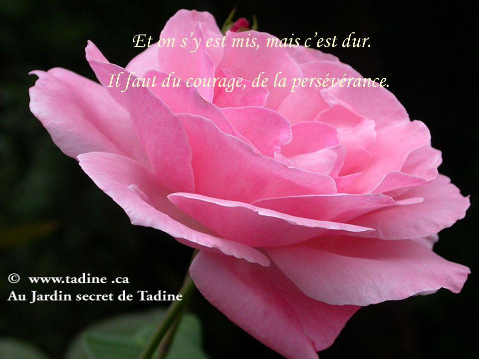 Et on sy est mis, mais cest dur. Il faut du courage, de la persévérance.