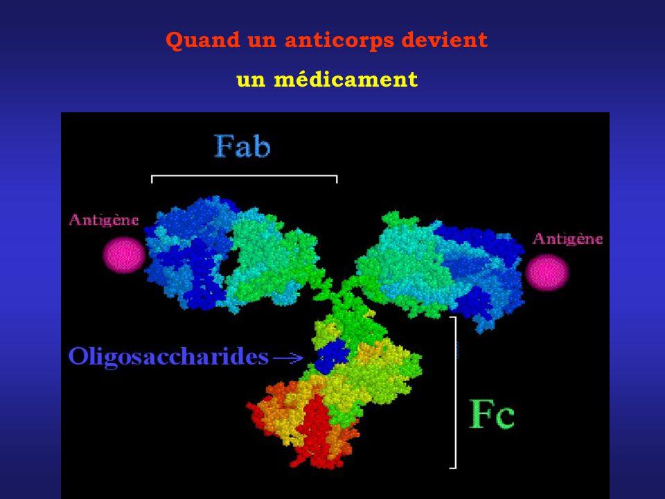 Le ciblage thérapeutique quand un anticorps devient un médicament Quand un anticorps devient un médicament